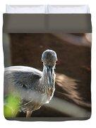 Ding Darling - Juvenile Black-crowned Night Heron Looking At You Duvet Cover