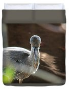 Ding Darling - Juvenile Black-crowned Night Heron Looking At You Duvet Cover