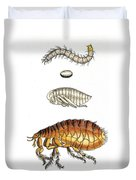 Dog Flea, Lifecycle, Illustration Duvet Cover