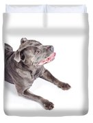 Dog Looking Up To Pet Copyspace Duvet Cover