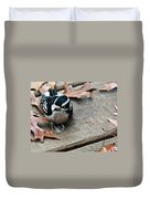 Downy Wooodpecker Picoides Pubscens Duvet Cover