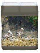 Ducks On A Rock Duvet Cover