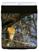 Early Morning Still Hunting  Coopers Hawk Art Duvet Cover