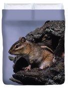 Eastern Chipmunk In Tree Duvet Cover