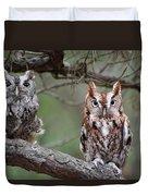 Eastern Screech Owls 424 Duvet Cover