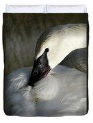 Elegant Trumpeter Swan Duvet Cover by Sue Harper