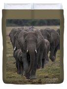 Elephant Herd Duvet Cover