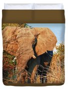 Elephant On Approach Duvet Cover