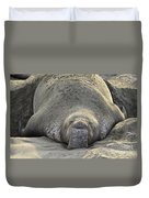 Elephant Seal 3 Duvet Cover