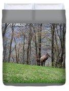 Elk, Blue Ridge Mountain Duvet Cover