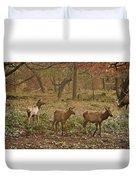 Elk In The Early Morning Duvet Cover