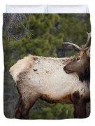 Elk Looking Back Duvet Cover