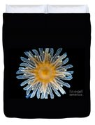 Ephyra Of A. Aurita Jellyfish, Lm Duvet Cover