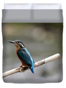 Eurasian Kingfisher Duvet Cover