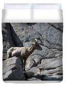 Ewe Bighorn Sheep Duvet Cover