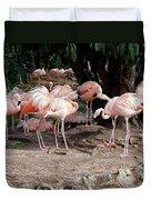Fabulous Flamingos Duvet Cover