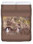 Fallow Deer Buck Duvet Cover