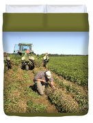Farmer Inspects Peanut Field Duvet Cover