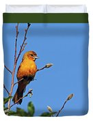 Female Baltimore Oriole Duvet Cover