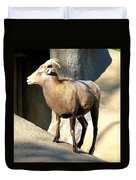 Female Bighorn Sheep Ewe Duvet Cover