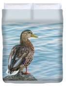 Female Mallard At The River Duvet Cover