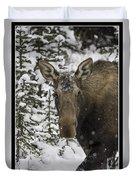 Female Moose In A Winter Wonderland Duvet Cover