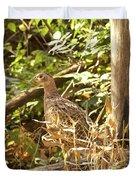 Female Ring-necked Pheasant - Phasianus Colchicus Duvet Cover