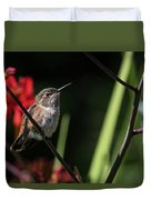Female Rufous Hummingbird Duvet Cover