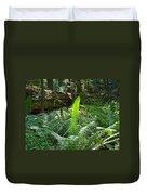 Ferns Sunlit Redwood Forest Fern Giclee Art Prints Baslee Troutman Duvet Cover