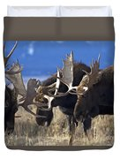 Fighting Moose Duvet Cover