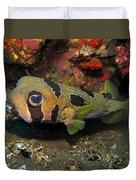 Fish Ball Duvet Cover