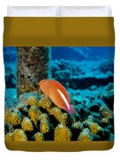 Fish On Coral Duvet Cover