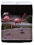 Flamgos 3 San Diego Zoo Duvet Cover