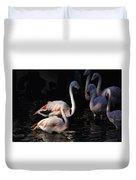 Flamingo Study - 2 Duvet Cover