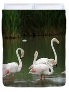 Flamingoes And Their Reflections Duvet Cover