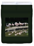 Flamingos With Reflection Duvet Cover
