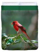 Florida Cardinal Duvet Cover