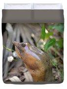 Florida Soft Shelled Turtle Duvet Cover