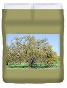 Flowering Huisache Tree  Duvet Cover