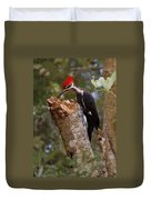 Foraging Pileated Woodpecker Duvet Cover