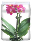 Fresh Pink Orchid In Pot Duvet Cover