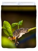 Frogs Life Duvet Cover