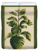 Frosted Thorn, Crataegus Prunifolia Variegata Duvet Cover
