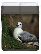 Fulmar Nesting On Cliff Duvet Cover