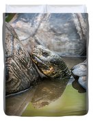 Galapagos Giant Tortoise In Pond Amongst Others Duvet Cover