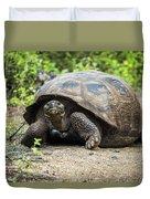 Galapagos Giant Tortoise Walking Down Gravel Path Duvet Cover