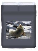 Galapagos Sea Lion Duvet Cover