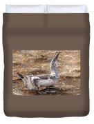 Gannet Chick 1 Duvet Cover