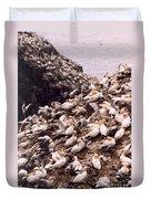 Gannet Cliffs Duvet Cover