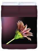 Gazania On Dark Background 2 Duvet Cover